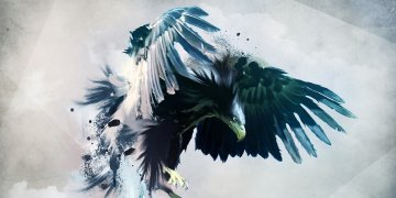 Bird Twitter Covers