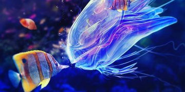 Blue Jellyfish L Twitter Covers