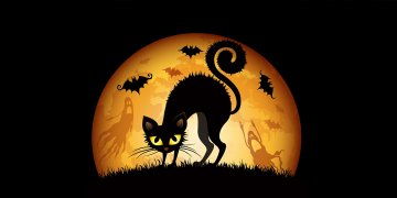 Cats Halloween L Twitter Covers